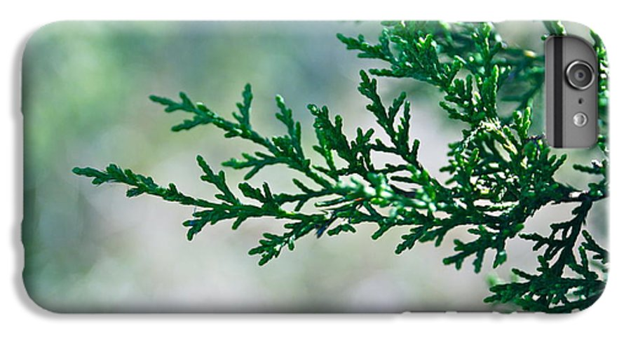 Close Up IPhone 8 Plus Case featuring the photograph Green Cedar by M E Wood