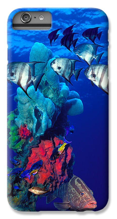 Photography IPhone 8 Plus Case featuring the photograph Spadefishes With Nassau Grouper by Panoramic Images