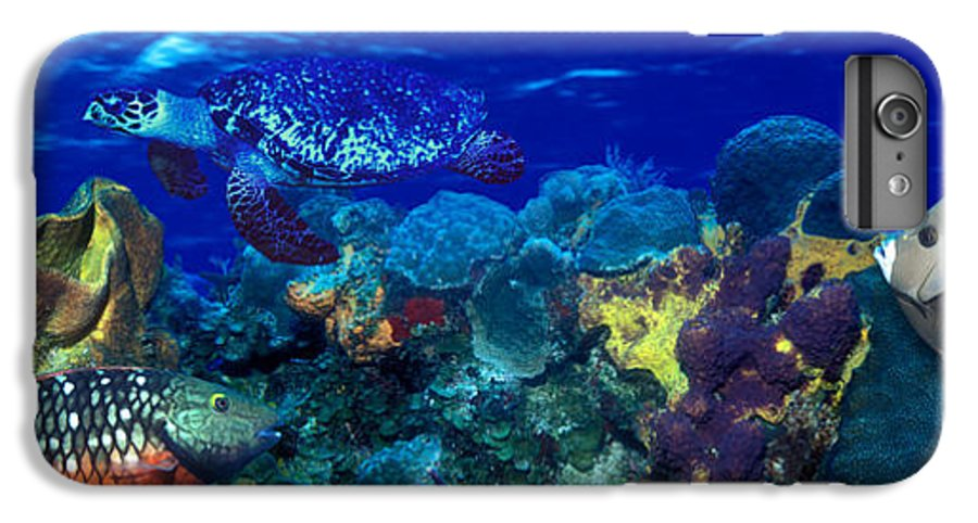 Photography IPhone 8 Plus Case featuring the photograph Stoplight Parrotfish Sparisoma Viride by Panoramic Images