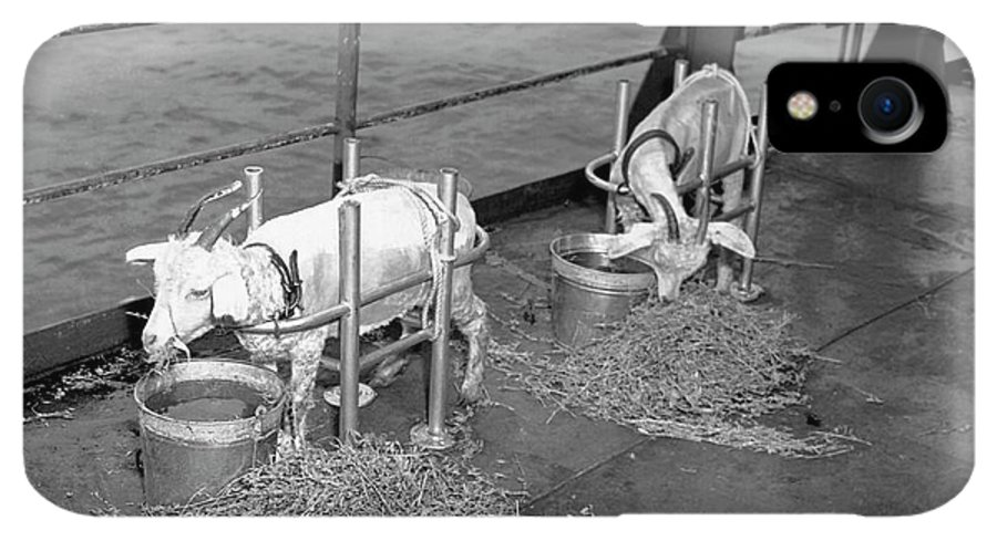 Able Day Bikini Test IPhone XR Case featuring the photograph Goats On Deck Of Ship Before Atom Bomb Detonation by Us National Archives/science Photo Library