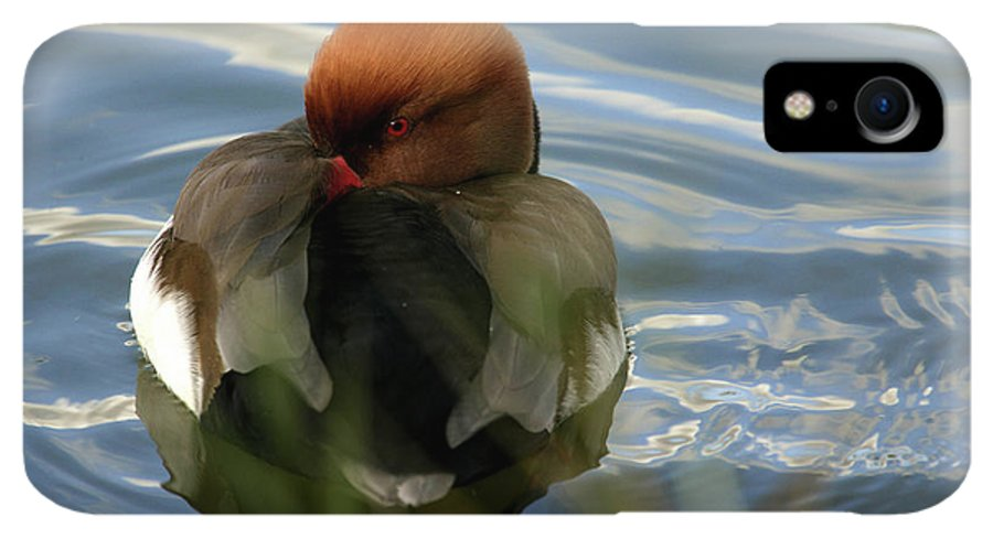 Red-crested Pochard IPhone XR Case featuring the photograph Red-crested Pochard -netta by David Santiago Garcia
