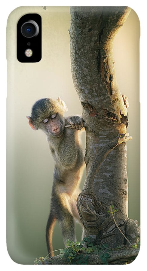 Baboon IPhone XR Case featuring the photograph Baby Baboon In Tree by Johan Swanepoel
