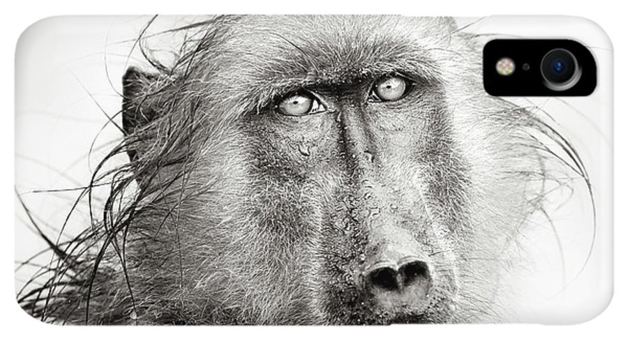 Baboon IPhone XR Case featuring the photograph Wet Baboon Portrait by Johan Swanepoel