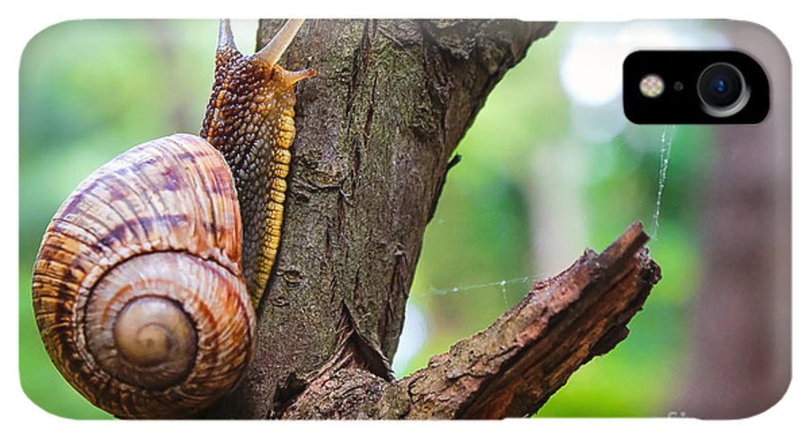 Antenna IPhone XR Case featuring the photograph Snail On The Tree In The Garden. Snail by Bozhena Melnyk