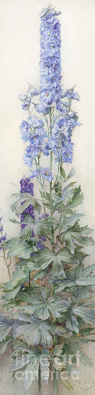 James Valentine Jelley Poster featuring the painting Delphiniums by James Valentine Jelley