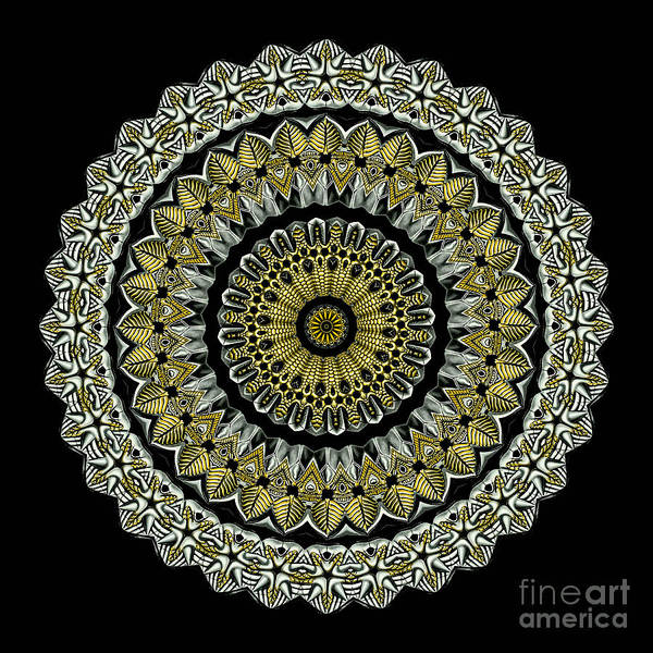 Ernst Haeckel Poster featuring the photograph Kaleidoscope Ernst Haeckl Sea Life Series Steampunk Feel by Amy Cicconi
