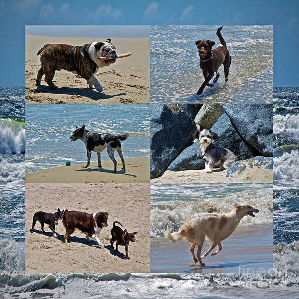 Dog Poster featuring the photograph Uninhibited Creatures by Gwyn Newcombe