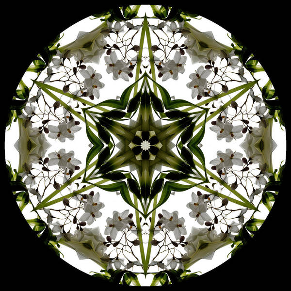 Mandala; Floral; Botanical; Scanner Photography; Scanography; White; Green; Leaves; Poster featuring the photograph Alstroemeria Wild 1 by Marsha Tudor