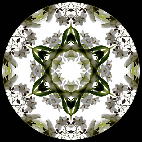 Mandala; Floral; Botanical; Scanner Photography; Scanography; White; Green; Leaves; Poster featuring the photograph Alstroemeria Wild 2 by Marsha Tudor