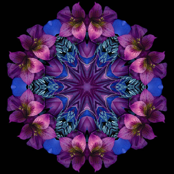 Mandala; Floral; Botanical; Scanner Photography; Scanograph;alstroemeria; ;magenta; Blue; Poster featuring the photograph Blue And Burgundy by Marsha Tudor