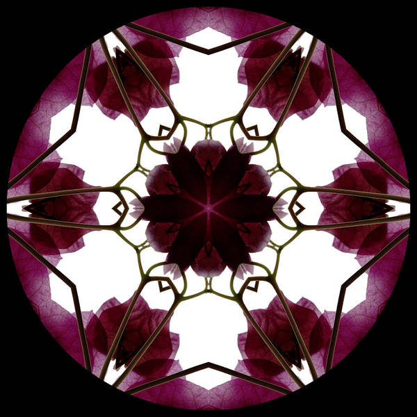 Mandala; Floral; Botanical; Scanner Photography; Scanography; Magenta; Bougainvillea; Leaves; Poster featuring the photograph Bougainvillea Transparency 3 by Marsha Tudor