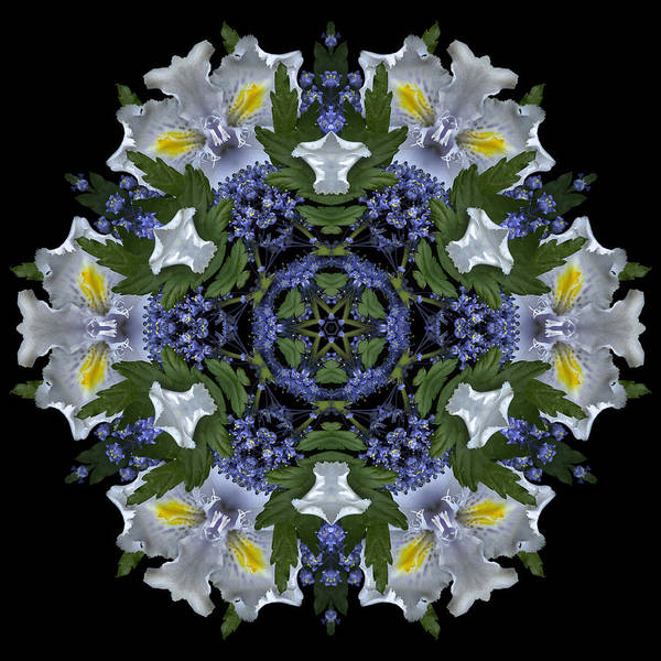 Mandala; Floral; Botanical; Scanner Photography; Scanography;ceanothus; Blue; White; Green; Leaves; Poster featuring the photograph Ceanothus Iris Medley 2 by Marsha Tudor