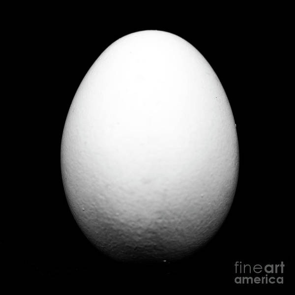 Egg Poster featuring the photograph Egg by John Rizzuto