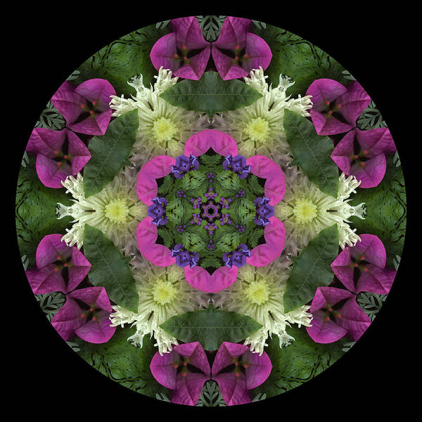 Mandala; Floral; Botanical; Scanner Photography; Scanography; Magenta; Pink; Green; Leaves Poster featuring the photograph Fringe With Pink by Marsha Tudor