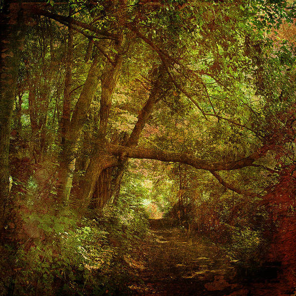 Forest Poster featuring the photograph In A Forest by Inesa Kayuta