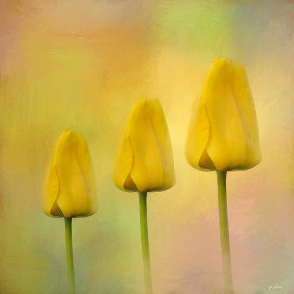 Flower Poster featuring the photograph Triplets by Jai Johnson