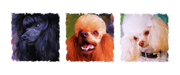 Poodle Poster featuring the painting Poodle Trio by Jai Johnson