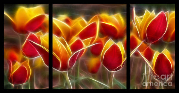 Cluisiana Poster featuring the digital art Cluisiana Tulips Triptych by Peter Piatt