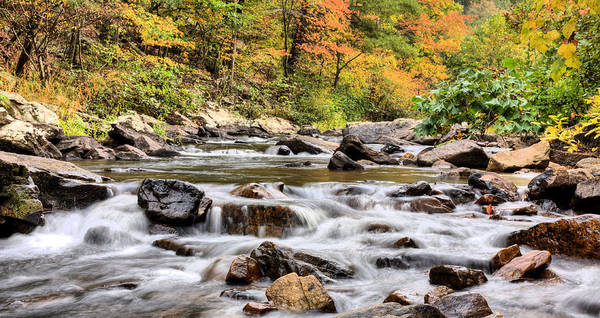 Mountain Creek Stream Fall Autumn Shenandoah George Washington National Forest Mountains Blueridge Blue Ridge Front Royal Virginia Va National Park Haymarket Valley Vally Appalachian Appalachia Gw Forrest Color Colors Colours Colour Nature Natural Path Trail Hiking Hikes Pond Reflection Reflections Rustic Rural Trout Fishing Upstream Fly Poster featuring the photograph Upstream by JC Findley