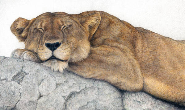 Big Cat Poster featuring the painting Power And Grace At Rest by Pat Erickson