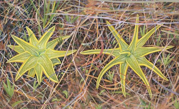 Flowers Poster featuring the painting Yellow Butterwort In Habitat by Scott Bennett