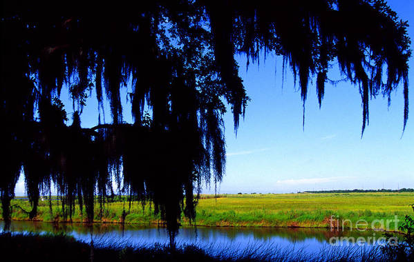 Louisiana Outback Poster featuring the photograph Sabine National Wildlife Refuge by Thomas R Fletcher