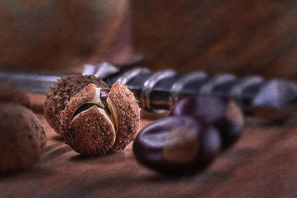 Aesculus Poster featuring the photograph Buckeye Nut Still Life by Tom Mc Nemar