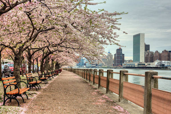 Nyc Poster featuring the photograph Spring Along The East River by JC Findley