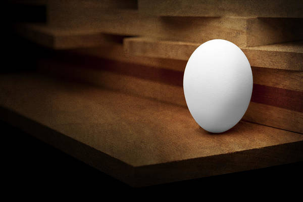 Animal Egg Poster featuring the photograph The Egg by Tom Mc Nemar