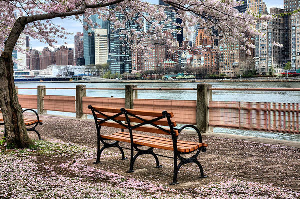 Nyc Poster featuring the photograph Under The Cherry Tree by JC Findley