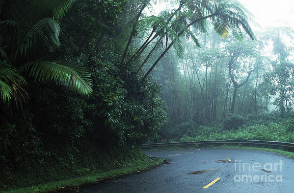 Puerto Rico Poster featuring the photograph Misty Rainforest El Yunque by Thomas R Fletcher