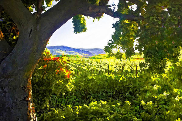 Vineyard Poster featuring the digital art Shady Vineyard by Patricia Stalter