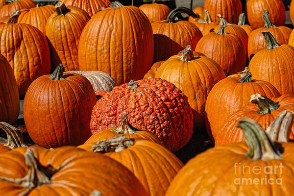Pumpkin Poster featuring the photograph One Of A Kind by Edward Sobuta