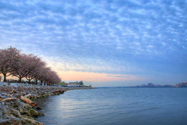 Cherry Blossoms Blossom Washington Dc Potomac River Sunrise Sunset Joint Base Anacostia Bolling Afb Alexandria Va Virginia Poster featuring the photograph Down River by JC Findley