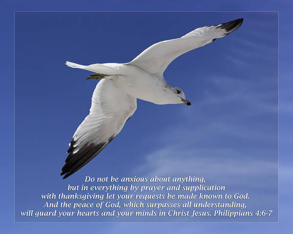 Bible Poster featuring the photograph Philippians 4 6-7 by Dawn Currie