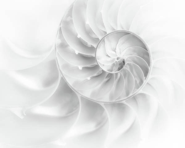 Abstract Poster featuring the photograph Nautilus Shell In High Key by Tom Mc Nemar