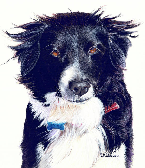 Border Collie Poster featuring the painting Cover Girl by JK Dooley