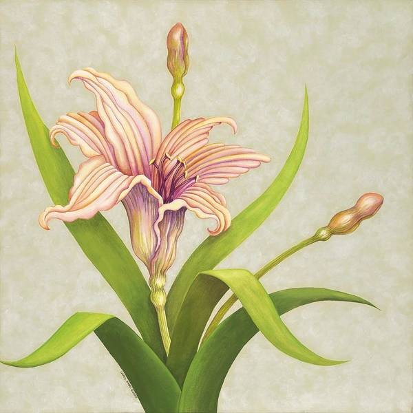 Soft Peach Lily In A Pose Poster featuring the painting Peach Lily by Carol Sabo
