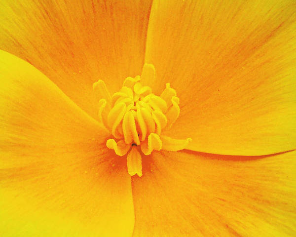 Centerpiece . Yellow Poster featuring the photograph A Study In Yellow- Centerpiece 003 by George Bostian