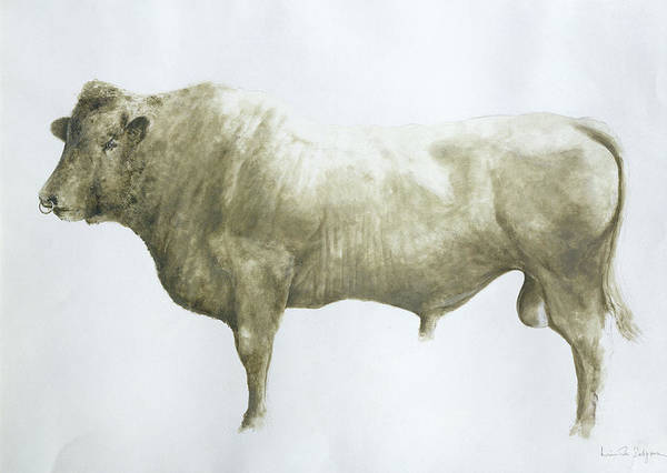 Animal; Nose Ring Poster featuring the painting Islay Bull by Lincoln Seligman
