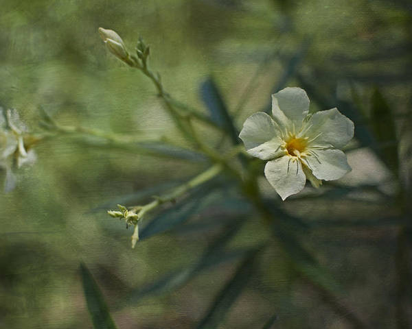 Flowers Poster featuring the photograph ... by Mario Celzner