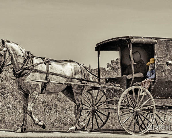Horse Poster featuring the photograph Amish Boy Tips Hat by Robert Frederick
