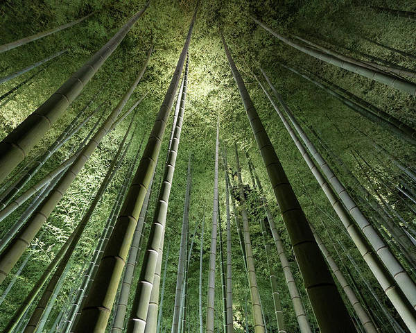 Bamboo Poster featuring the photograph Bamboo Night by Takeshi Marumoto