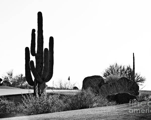 Black &white Poster featuring the photograph Cactus Golf by Scott Pellegrin