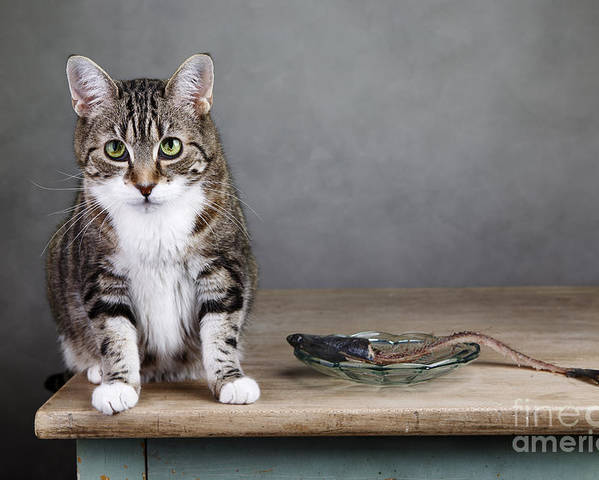 Cat Poster featuring the photograph Caught In The Act by Nailia Schwarz