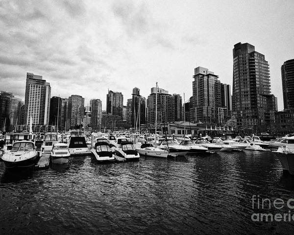 High-rise Poster featuring the photograph coal harbour marina and high rise apartment condo blocks in the west end Vancouver BC Canada by Joe Fox