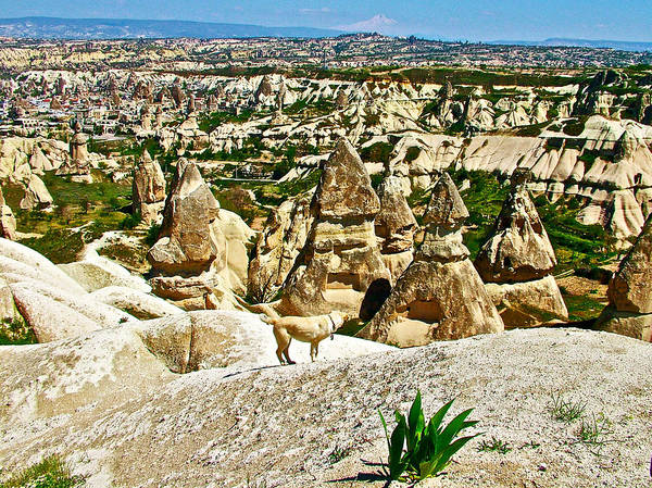 Dog Looking At Fairy Chimneys In Cappadocia Poster featuring the photograph Dog Looking At Fairy Chimneys In Cappadocia-turkey by Ruth Hager