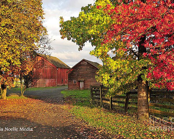 Photos Poster featuring the photograph Fall On A Farm In Oregon by Tonia Noelle
