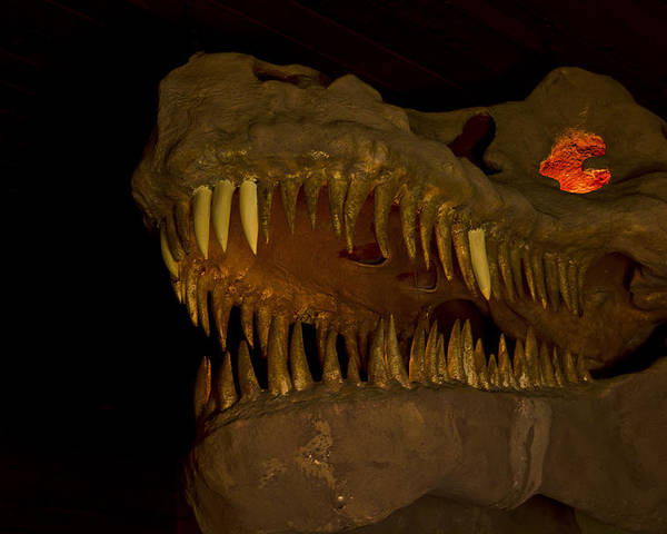 Grand Canyon Caverns Poster featuring the photograph Fire In His Eyes by Kenan Sipilovic