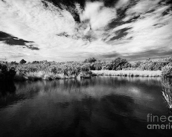 Florida Poster featuring the photograph Flooded Grasslands And Mangrove Forest In The Florida Everglades Usa by Joe Fox